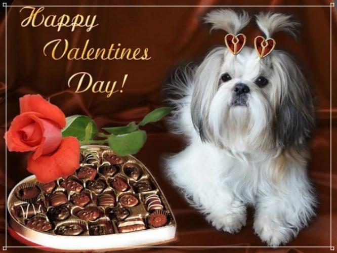 Найти творческую картинку (поздравление любимой девушке) с днём святого Валентина! Для инстаграм!