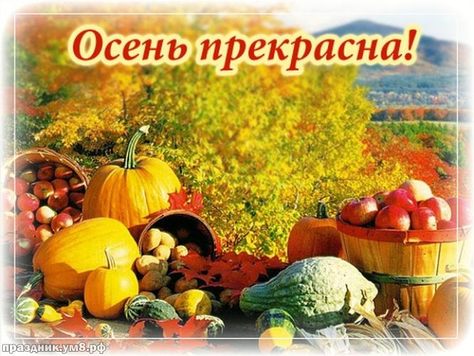 Скачать бесплатно актуальную открытку с первым днём осени, 1 сентября, красивое поздравление в прозе! Поделиться в pinterest!