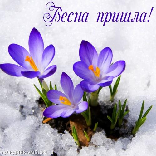 Скачать бесплатно первоклассную открытку с первым днём весны, 1 марта! Красивые открытки! Отправить на вацап!