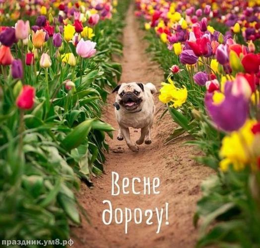 Скачать окрыляющую картинку с первым днём весны, открытки весны, картинки с весной, 1 марта! Переслать на ватсап!