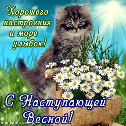 Скачать онлайн сказочную картинку (открытки с первым днём весны, картинки с первым днём весны, 1 марта) с праздником, друзья! Отправить на вацап!