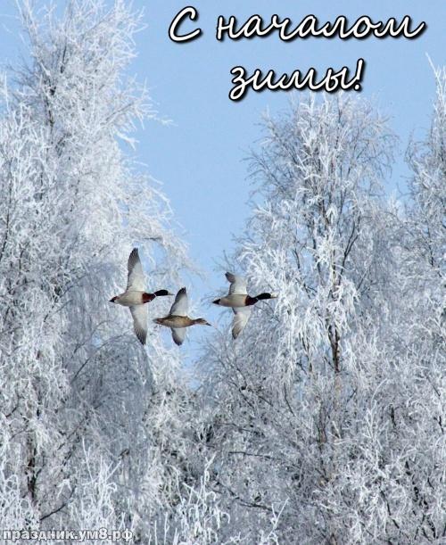 Скачать онлайн аккуратную открытку (открытки с первым днём зимы, картинки с первым днём зимы, 1 декабря) с праздником, друзья! Переслать в instagram!