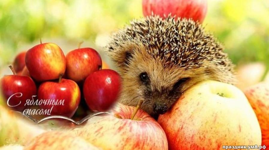 Скачать ритмичную открытку на яблочный спас, красивые открытки с яблочным спасом, пожелания своими словами! Поделиться в вк, одноклассники, вацап!
